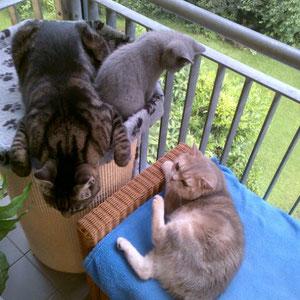 unsre drei Kater (und keine Sorge: da ist ein katzentaugliches Insektennetz montiert)