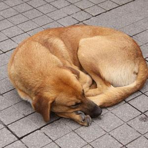 Der Hund hat einfach miten auf der Fußgängerzone geschlafen.. :O
