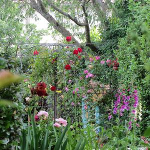 fleurs dans le jardin d'ombre
