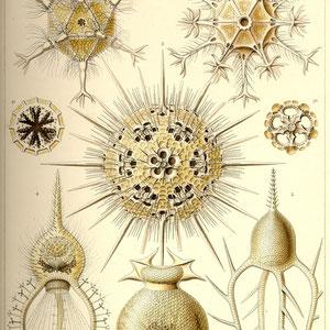 Ernst Haeckel - Kunst-Formen der Natur