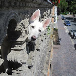 Vom Balkon in der Roggemannstraße hat man den besten Blick. So wie Lilly.