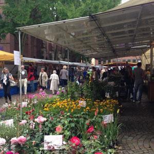 Wochenmarkt an der Lambertikirche