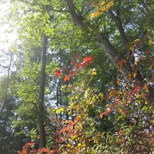 大峰高原の秋