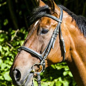 Auch Pferde sind gute Models für Portraits.