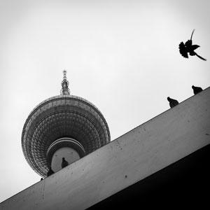 Der Fernsehturm in Berlin ragt in die Höhe, auf dem Eingangsgebäude darunter haben sich ein paar Tauben niedergelassen
