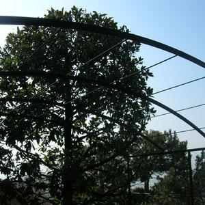 avec une treille, profitez d'un ombrage végétal