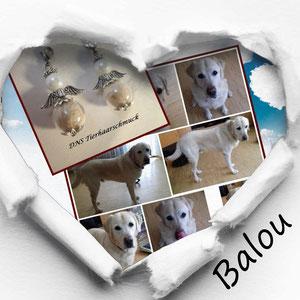 Balou, in liebevoller Erinnerung
