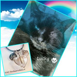 Kucky, in liebevolle Erinnerung