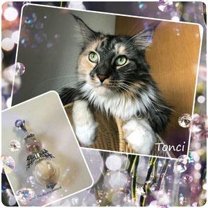 Tonci, eine Schönheit