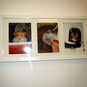 von links nach rechts: Simba, Knöllchen, Keno