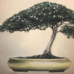 Baum der tausend Sterne, Öl auf Leinwand, 42 x 32