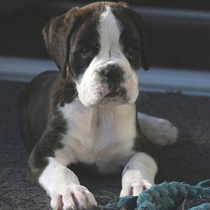 Dexter-Bruno