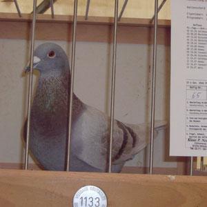 Bester Vogel der RV-WATTENSCHEID 2011-DV-2124-10-14.13 x Gesetzt 12 Pr / 4541Prkm. & 1076,94 ASP.