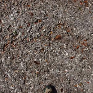Wege aus Muscheln in Savannah
