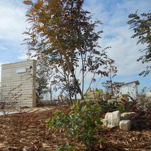 ご一緒に選んだ備前の耐火レンガを、土中に埋もれていた遺跡が長年の眠りから覚めて顔を出したようなイメージで積みました。後々、落ち着いたら野菜や季節の花植えを楽しみたいというご希望があるため、木々の足元にはそれまでの化粧としてマルチング材を敷き詰めています。                                      岡山市北区 O様邸 フラワーチルドレン  エクステリア