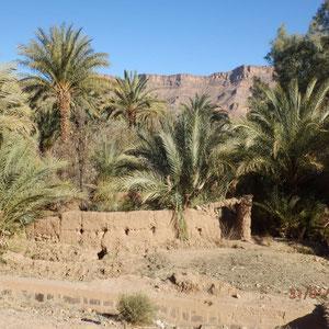 oase langs de route