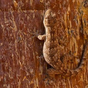 Madagaskar: Echse Ton in Ton mit der Umgebung