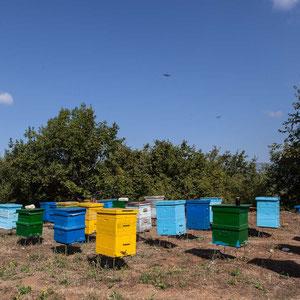 Azerbaijan - Unterwegs von Lahij nach Baku - Beim Honigverkäufer an der Strasse