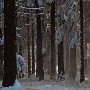 GAIS - Schneewald