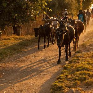 Madagaskar: Abendstimmung in Miandrivazo am Fluss Tsiribihina