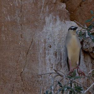 Madagaskar: Vogel an einer Felswand