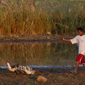 Madagaskar: Junge auf dem Heimweg mit seinen Enten