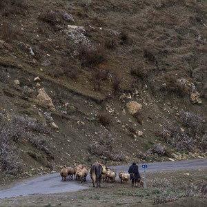 Azerbaijan - Schafhirt mit seinen Schafen - auf der Fahrt von Quba nach Xinaliq