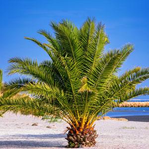 Palmenstranden in Frederikshavn (Bild von Willfried Wende auf Pixabay)