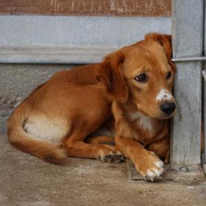 Bojt, kleiner lieber Rüde, 2 J. alt, aus der Tötung gerettet, hat eine ganz schlimme Zeit hinter sich