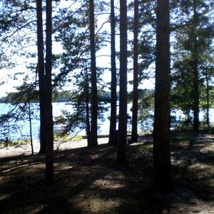 Strand und Wald. Das könnte der Blick aus einem unserer Zelte sein, die Sie nach Verfügbarkeit kostenlos mitbenutzen können.