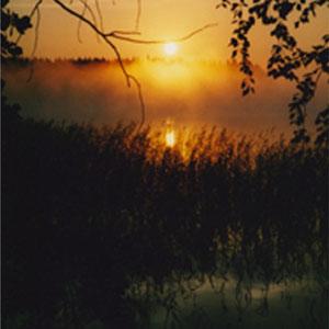 Schöne Sonnenaufgänge in den Schilfzonen.