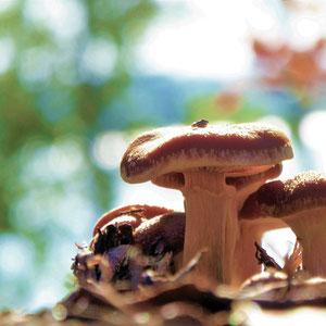 5 m vor der Terrasse warten die nächsten Pilze am Südhang zum See auf Ihren Finder.