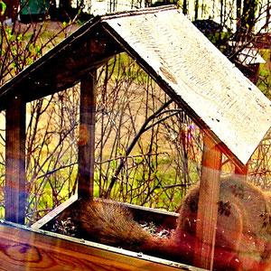 Gestatten, Squirrel, ab und zu Untermieter im Sunny Mökki Sysmä. Im Frühjahr suche ich auch hier mein Futter.