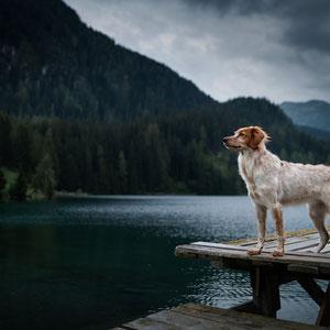 Hundeshooting bei schlechtem Wetter
