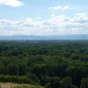Blick auf die Rheinwälder und die Vogesen (im Hintergrund)