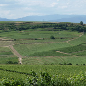 Blick in die Weinberge