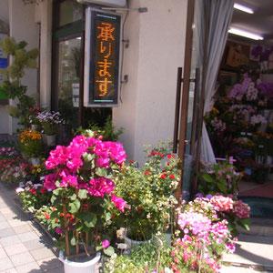 立ち寄ったお花やさん。店頭のブーゲンビリアが目にとびこんできました。