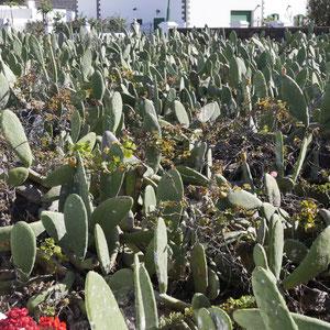 Oppuntien Plantagen