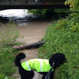 Mist, auch der Weg ist versperrt! Wasser...überall Wasser....