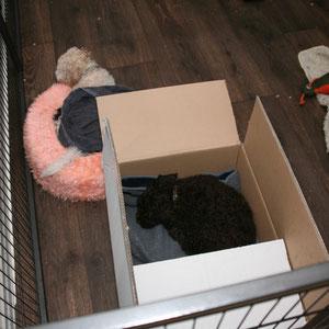 ja, op de warmste plek ligt Gina verstopt!