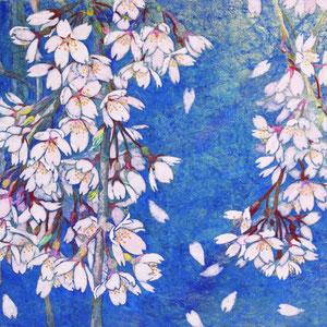 《枝垂れ桜》  24.2×33.3cm 2015