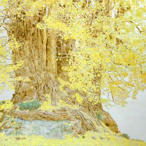 《黄樹》 P12 2020
