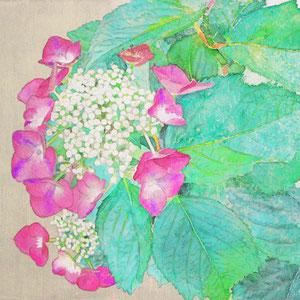 《紅紫陽花》 22.0×27.3cm 2016
