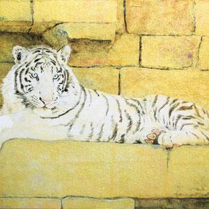 《白虎》 31.8×41.0cm 2016