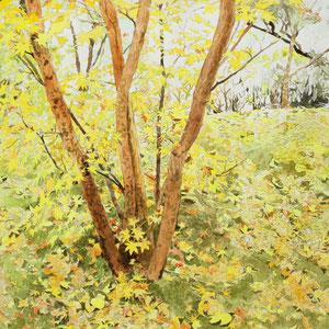 《紅葉》 31.8×41.0cm 2012