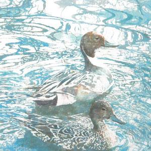 《遊泳》 91.0×116.7cm 2011