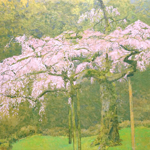 《長興山の桜》 M20 2019