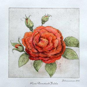 Rose Radierung handcoloriert // Druckplatte 19,6 x 20,2 auf Büttenpapier