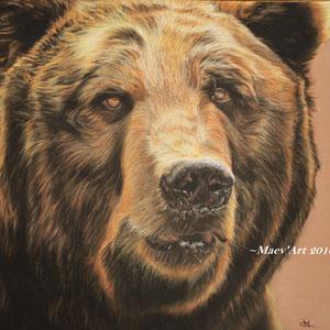 Portrait de grizzly aux pastels secs