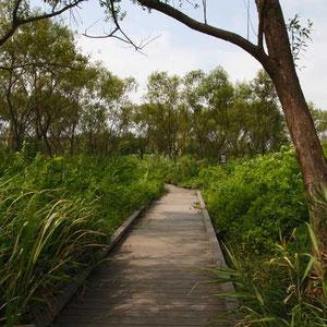 園内の木道
